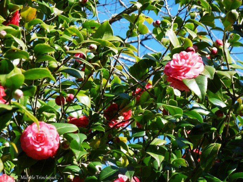 Fleurs de Léon 210218