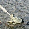 Une grenouille de la Fontaine de Tourny