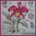 Photos du sal etudes botaniques #15