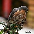 aviary-image-1518385539634