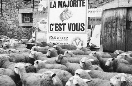 majorité-moutons