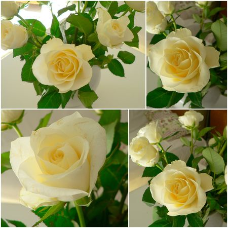 roses_blanche_septembre_2010