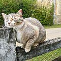 Petites nouvelles de chine et vie de chat