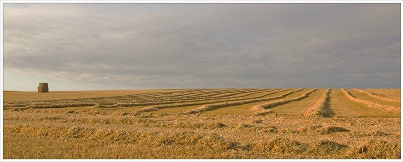 plaine moisson paysage paille matin 090715