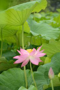 3 juillet Takamatsu Ritsurin 123