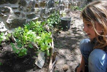jardin radis