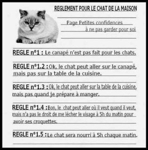 reglement chat