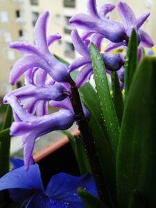 printemps_004