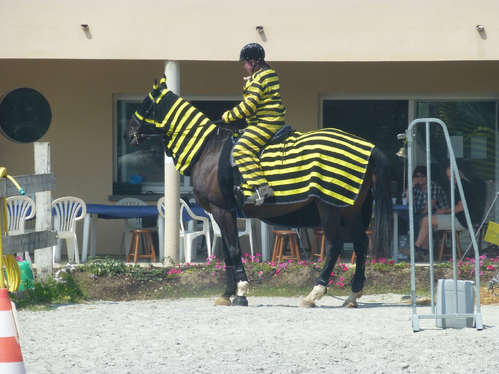 Jeux équestres manchots 2013 (196)