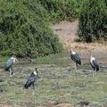 Botswana - birds