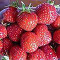 fraises de la cueillette 'Le Jardin du père Guyot' (10)