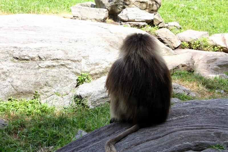J11 - 08 juillet 2014 - zoo du Bronx (19).JPG