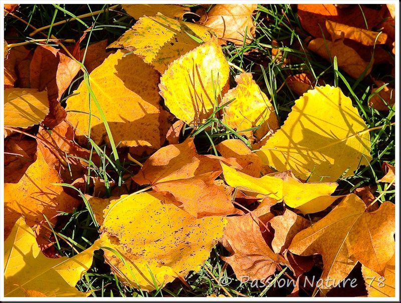 Feuilles en automne (1)