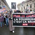 Fourrure 1 194
