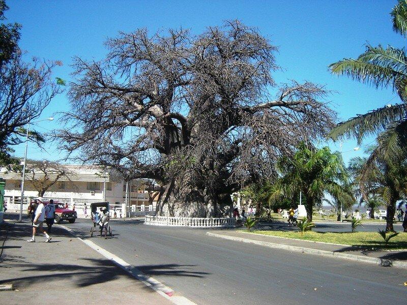 Baobaba
