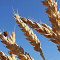 Paniers de regain de l'esterel : prochaine livraison de céréales et légumineuses le 6 juin