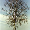 L'arbre - the tree - el arbol