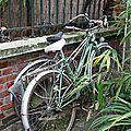 Vélos, végétation, Mouzaïa_6448