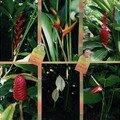 Flore tropicale 2
