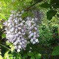 Petit jardin....grand bonheur