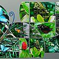 sachana butterfly 1