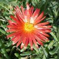 Dernières fleurs au jardin