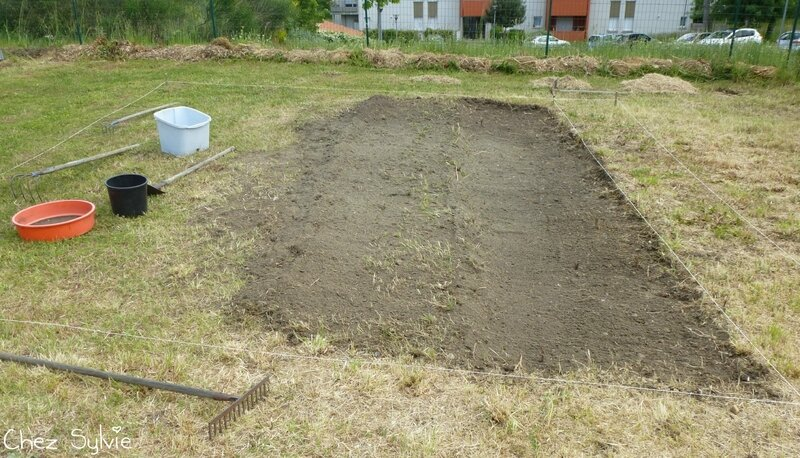 Potager permaculture 05