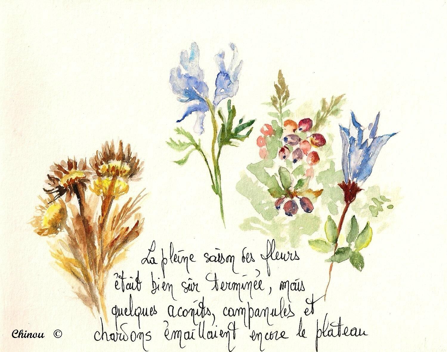 Flore plateau de Coscione