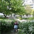 Jardin Damia - 11e