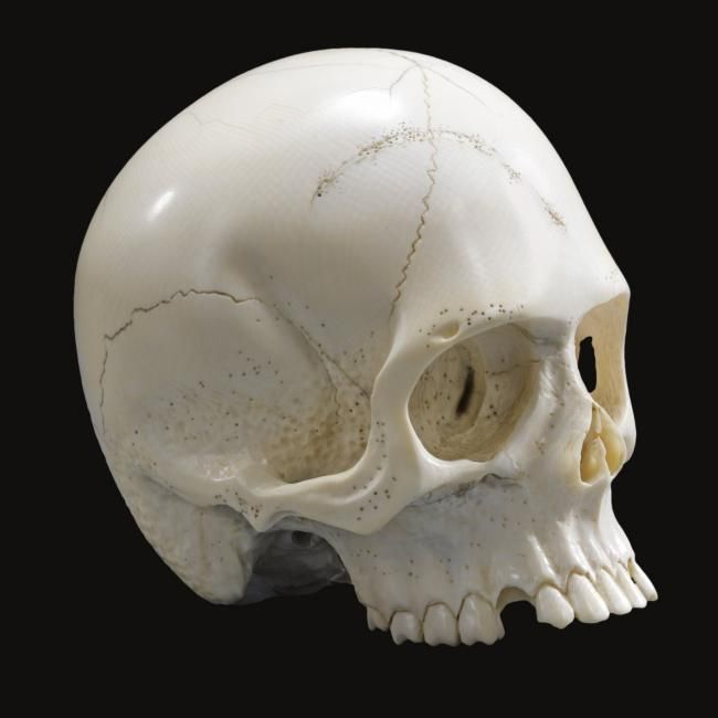 German or Austrian, 19th century, memento mori skull. photo Sotheby's