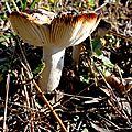 champignon-05853