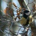 Oiseau en Forêt