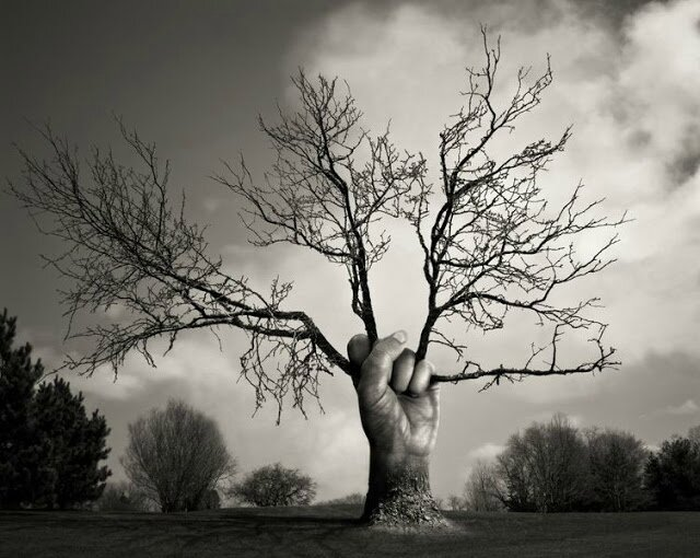 arbres à défendre