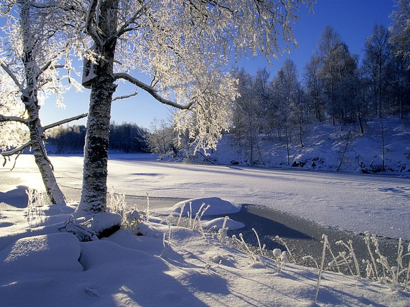 Sweden_snow_tree_wallpaper_1152x864