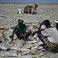 extraction du sel au Danakil