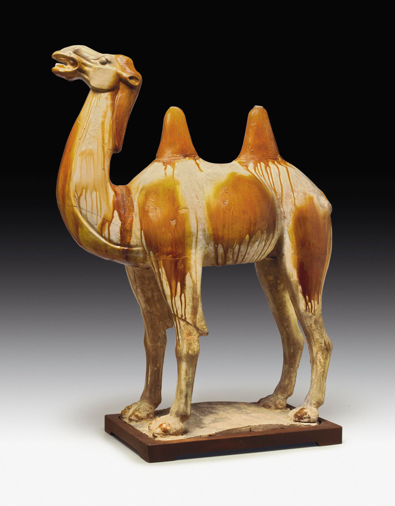 A large amber and straw-glazed pottery figure of a camel, Tang dynasty (618-907)