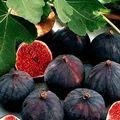 Croque-monsieur aux figues magret et gorgonzolla