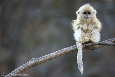 WPY little monkey