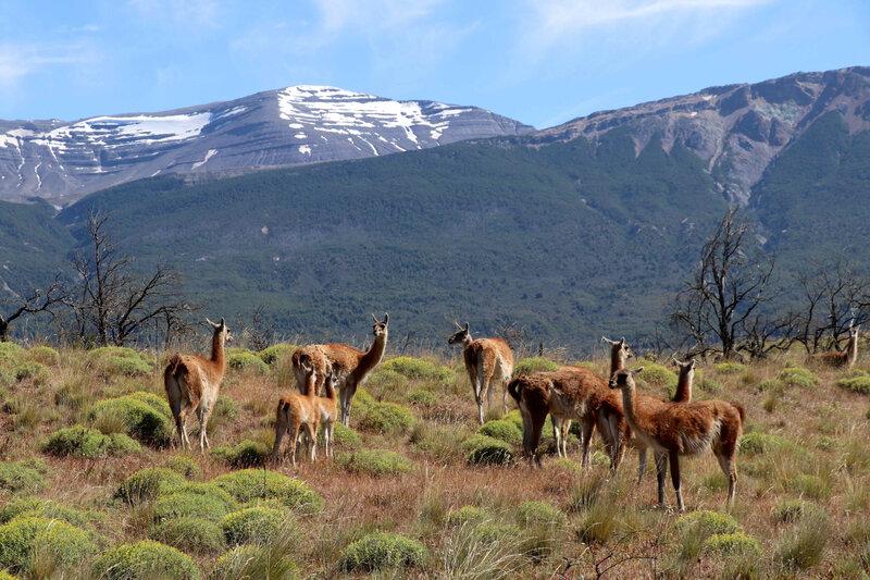 parc de patagnie 10