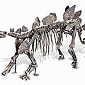 Nature at home: huge stegosaurus skeleton to be sold by auctionata at redgallery