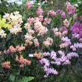 Variétes de fleurs
