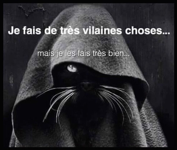 chat betises