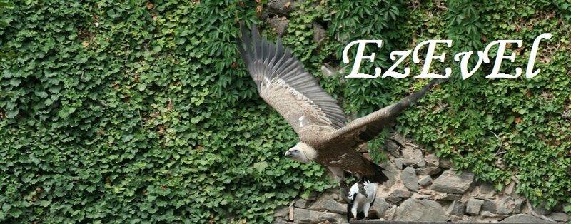 Volerie aigles EzEvEl 12