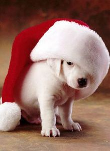 funny_christmas_pictures_09