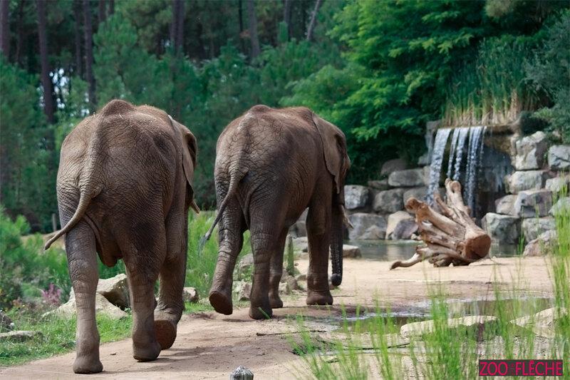 Elephant-(7)HR