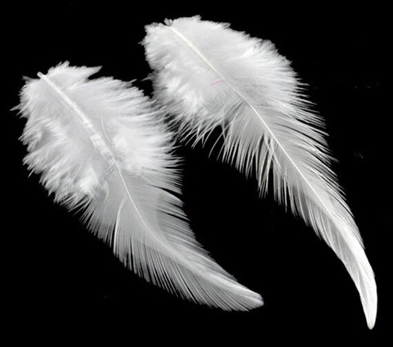 plumes-5-plumes-blanches-toutes-tailles-1193587-d10350-8083b_570x0