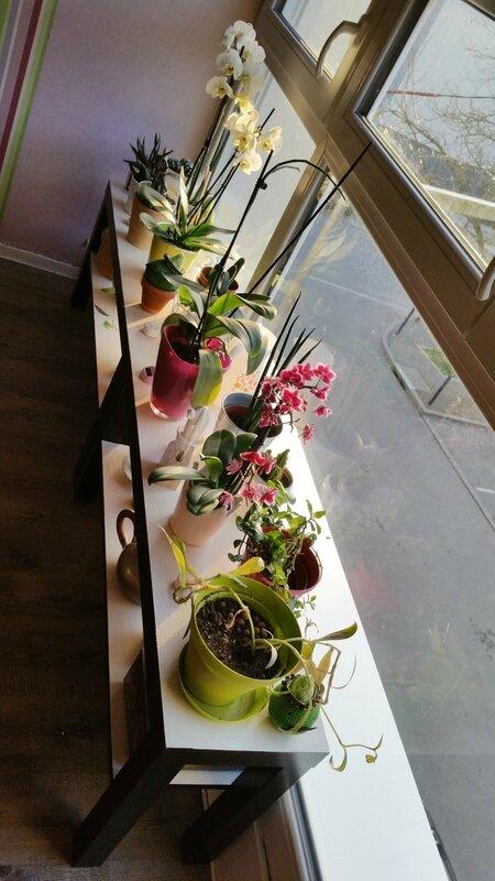 décoration-intérieur-plantes