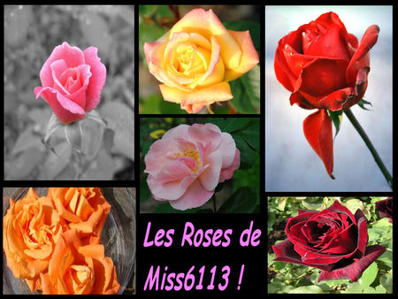 Rose_De_Miss6113