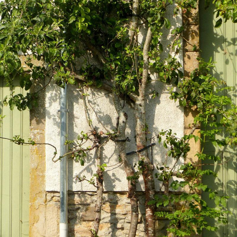 A PORTE FENETRE GRANDE GRILLES VASQUES FLEURS178