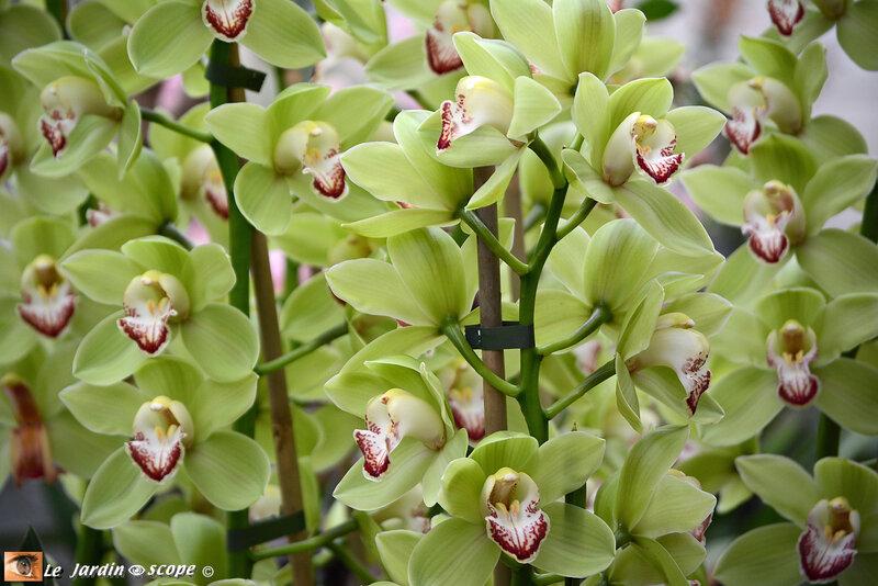 PAT_9248 Orchidées 2019 Orléans
